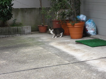 1.30新神戸7.JPG